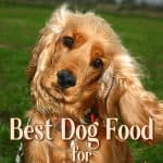 10 Best (Healthiest) Dog Foods For Cocker Spaniels in 2021