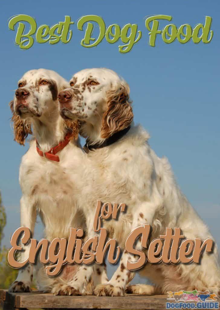 Best Dog Food for English Setter