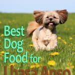 Best Food For Lhasa Apso: Top Puppy, Adult & Senior Recommendations for 2020