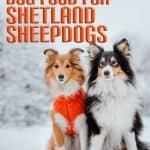 10 Best & Healthiest Dog Foods For Shetland Sheepdogs in [year]