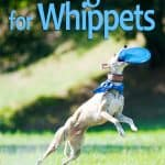 10 Best & Healthiest Dog Foods for Whippets in 2020