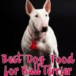 10 Best (Healthiest) Dog Foods For Bull Terriers in 2021