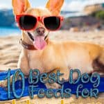 10 Best (Top Rated) Dog Foods for Chihuahuas in 2021