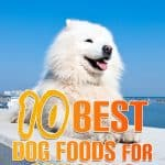 10 Best (Top Rated) Dog Foods for Samoyeds in 2021