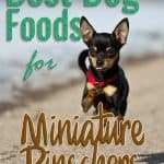 10 Best (Highest Quality) Dog Foods for Miniature Pinschers in 2021
