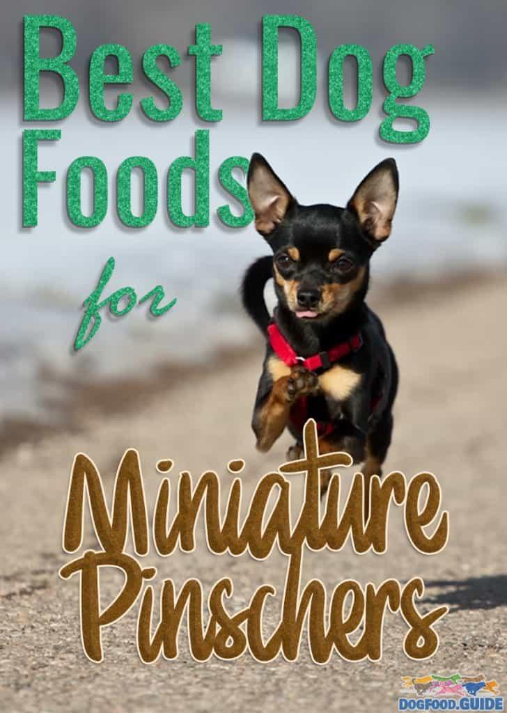 Best Dog Foods for Miniature Pinschers