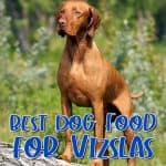 10 Best (Healthiest) Dog Food For Vizslas in [year]