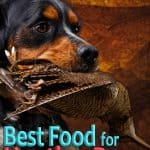 10 Best & Healthiest Dog Food For Hunting Dogs in 2021