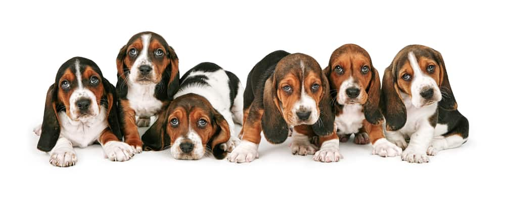 10 Best (Healthiest) Dog Foods for Basset Hounds in 2020 29