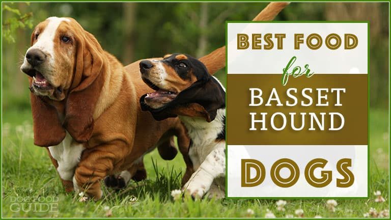 10 Best (Healthiest) Dog Foods for Basset Hounds in 2020 1