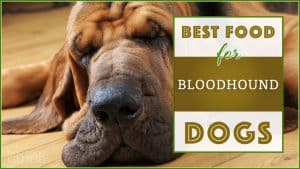 9 Best (Healthiest) Dog Foods For Bloodhounds in 2020 7