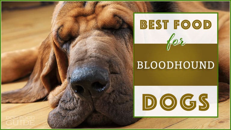 Best Dog Food For Bloodhounds
