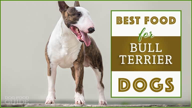 best dog food for bull terrier