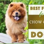 10 Best & Healthiest Dog Foods For Chow Chows in 2020