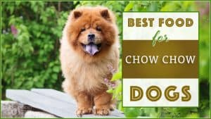 best dog food for chow chow