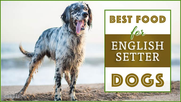 10 Best & Healthiest Dog Foods For English Setters in 2021 1