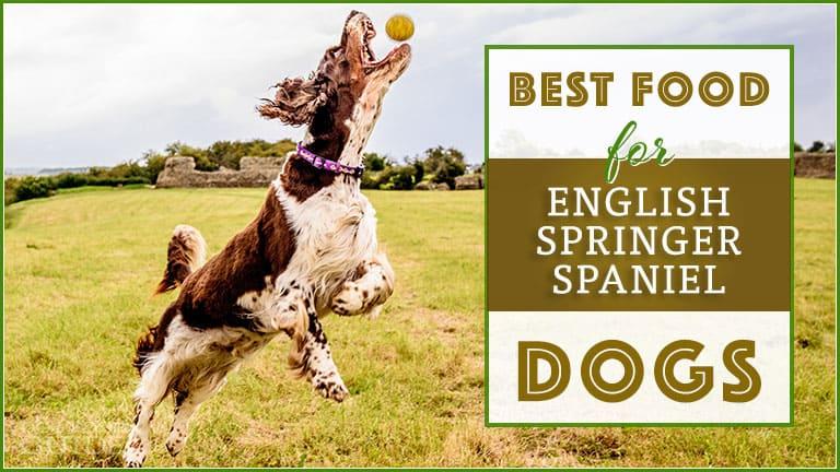 Best Dog Food For English Springer Spaniel