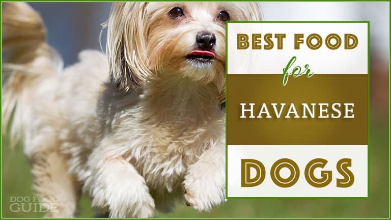 best dog food for havanese