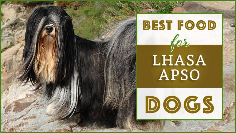 best food for lhasa apso