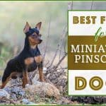 10 Best (Highest Quality) Dog Foods for Miniature Pinschers in 2020