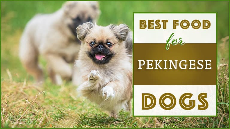 Best Dog Food For Pekingese