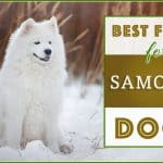 10 Best (Top Rated) Dog Foods for Samoyeds in 2020