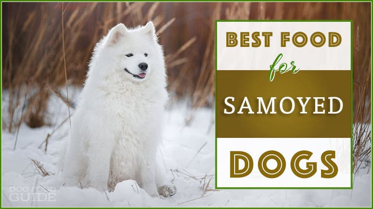 Best Dog Food for Samoyed