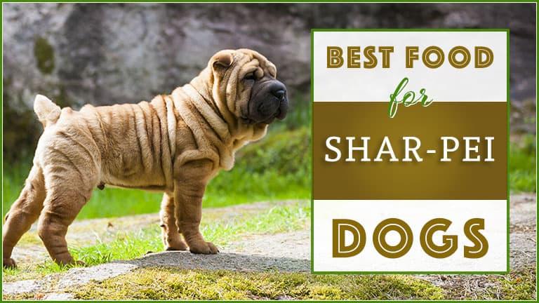 dog food for shar pei