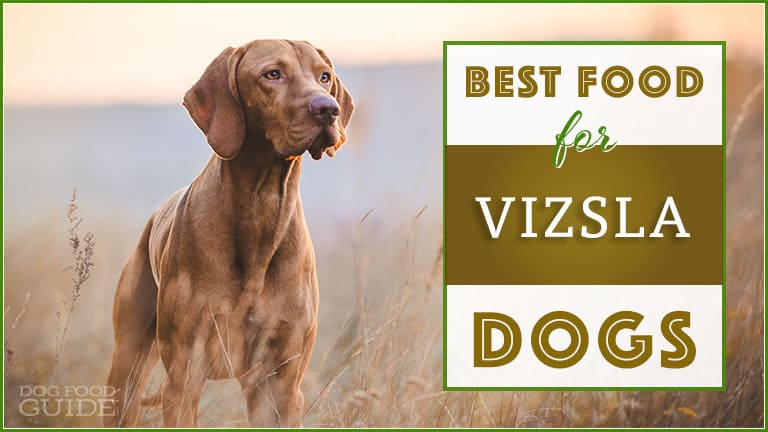dog food for vizsla