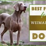 Best Dog Food for Weimaraners : Top Puppy, Adult & Senior Recommendations for 2020
