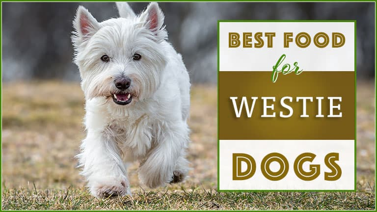 best dog food for west highland terriers