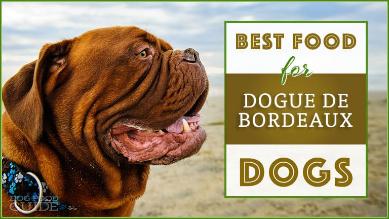 Best Dog Food for Dogue de Bordeaux