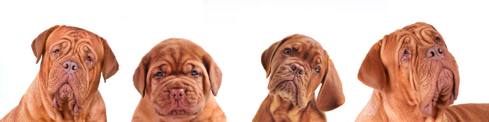 10 Best (Healthiest) Dog Food For Dogue De Bordeaux in 2020 28