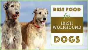 9 Best (Healthiest) Dog Food For Irish Wolfhound in 2020 7
