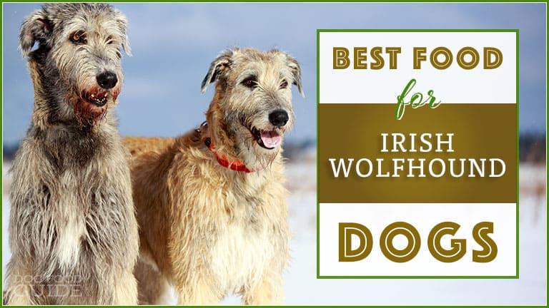10 Best & Healthiest Dog Food For Irish Wolfhound in 2021 1