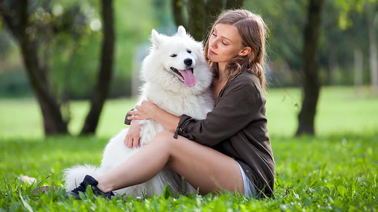 10 Best (Top Rated) Dog Foods for Samoyeds in 2021 31