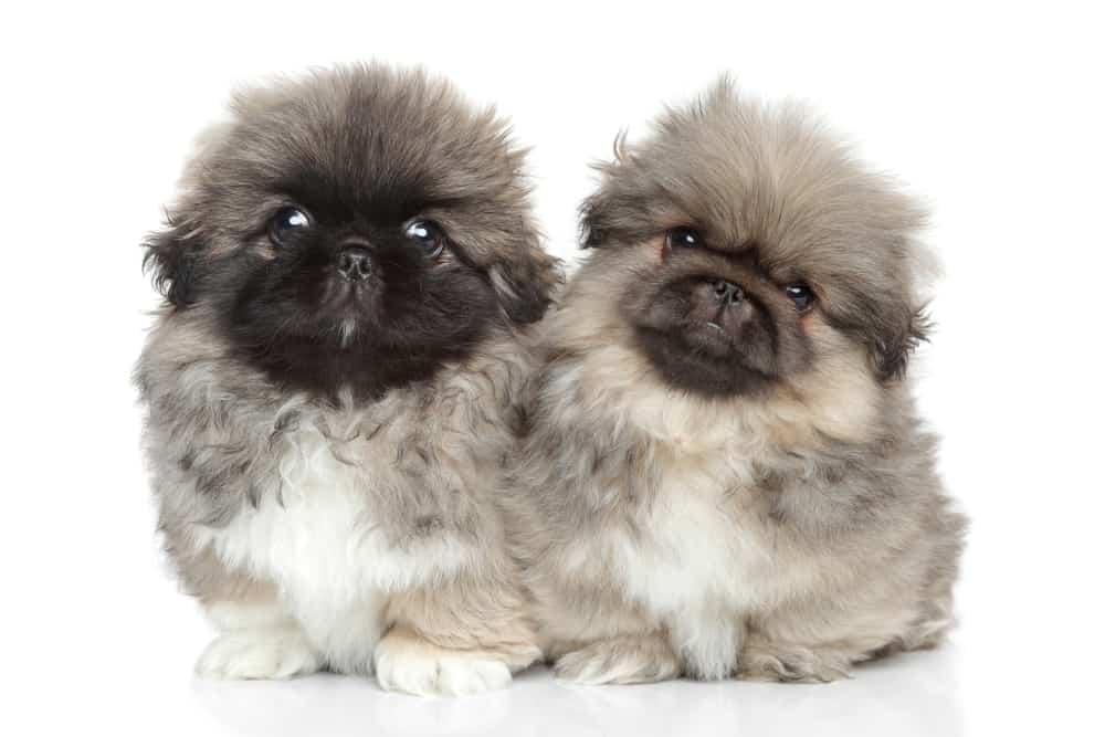 10 Healthiest & Best Dog Foods For Pekingese in 2020 29