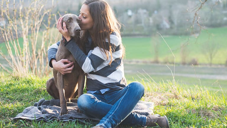 Best Dog Food for Weimaraners : Top Puppy, Adult & Senior Recommendations for 2020 8
