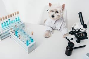 10 Best (Healthiest) Dog Foods For Westies In 2021 31