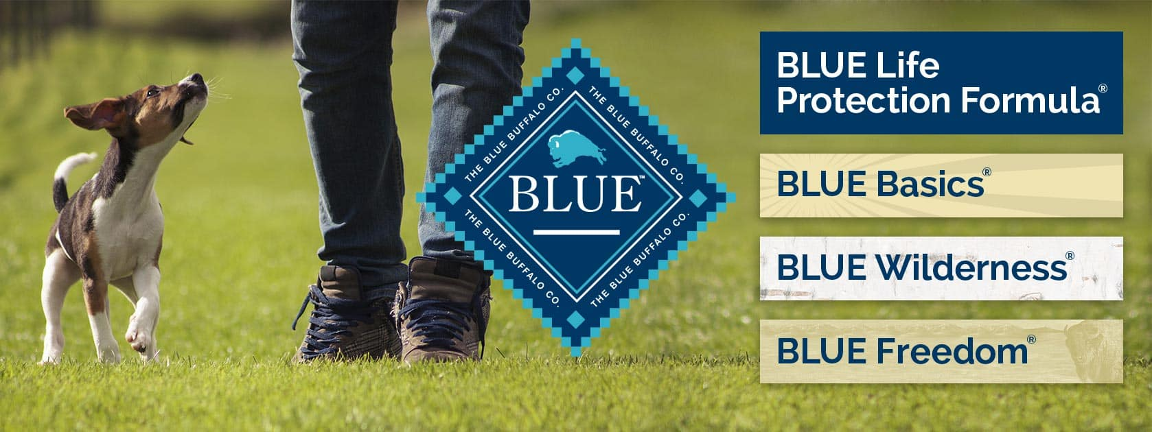 Blue Buffalo Dog Food Review 2020: The Healthy, Holistic Approach 1
