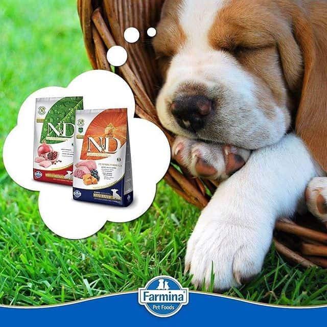 Farmina Dog Food Reviews, Recalls & Coupons [year] 25