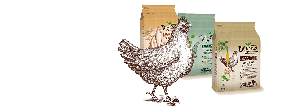 Purina Beyond Dog Food Review 2021: Best Budget Option? 28