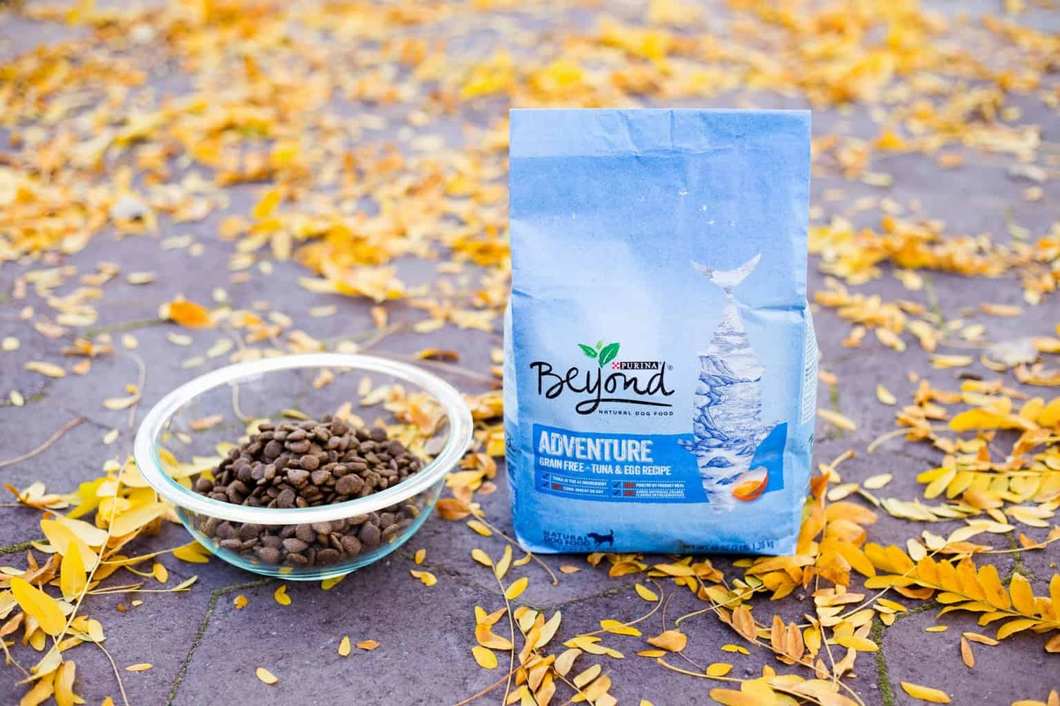 Purina Beyond Dog Food Review 2021: Best Budget Option? 17