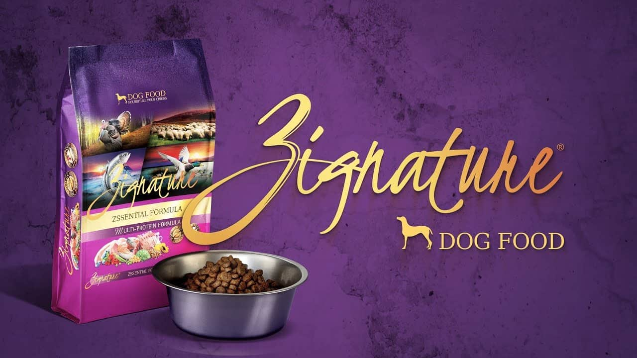 Zignature Dog Food Review 2021: Best Limited Ingredient Food? 1