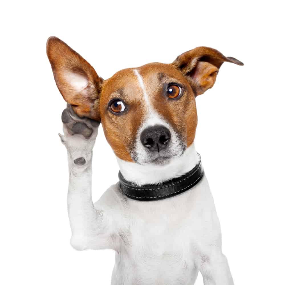 Hi-Tor Dog Food: 2021 Reviews, Recalls & Coupons 2