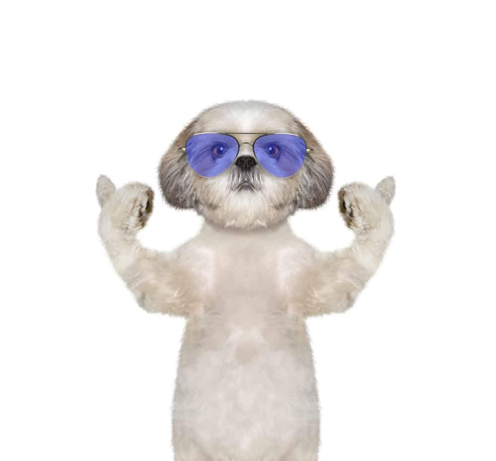 hi-tor dog food review