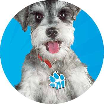Mighty Dog Dog Food Review 2021: The Mightiest Food for Small Dogs? 1