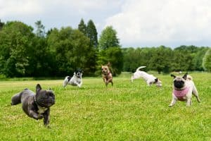 best dog foods for active dogs