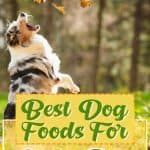 10 Healthiest & Best Dog Food for Active Dogs in [year]