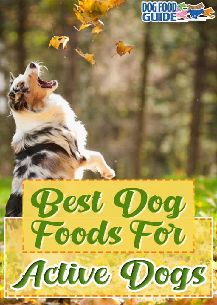 10 Best (Healthiest) Dog Foods for Active Dogs in 2020 13